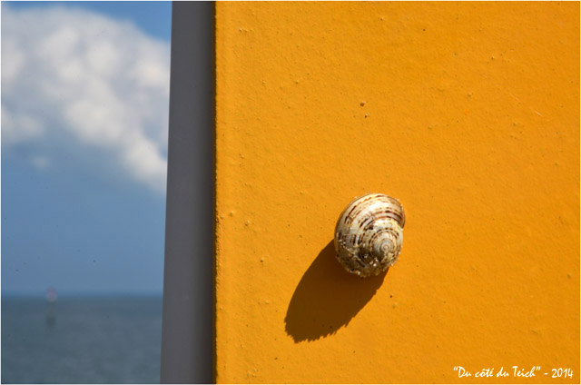 BLOG-DSC_28461-escargot portique jaune et rivages