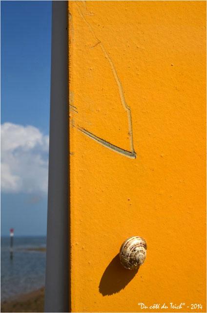 BLOG-DSC_28462-escargot portique jaune et rivages