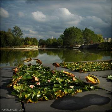 BLOG-DSC_2396-2-plantes aquatiques jardin botanique Bordeaux Bastide