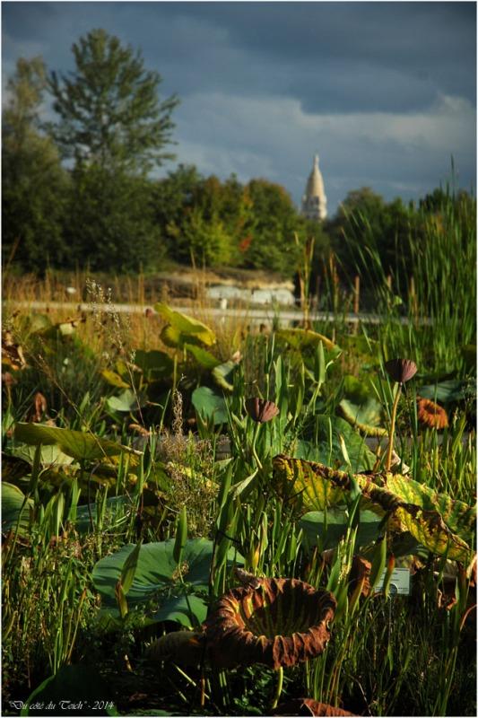 Octobre 2014 du c t du teich for Appartement bordeaux jardin botanique