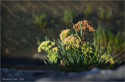 BLOG-DSC_31255-plante digue Arès