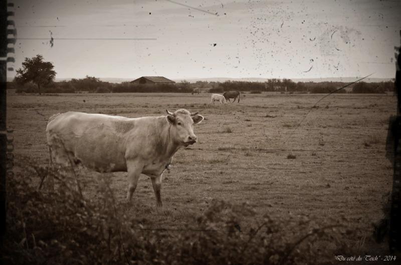 BLOG-DSC_31712-élevage ferme Graveyron PA03 sépia
