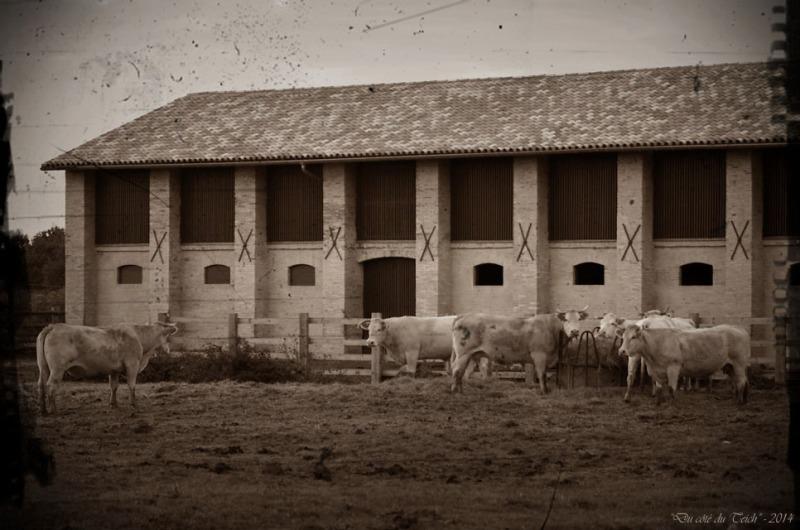 BLOG-DSC_31713-élevage ferme Graveyron PA03 sépia 1