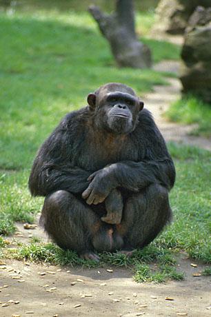 BLOG2-IMG240-gorille