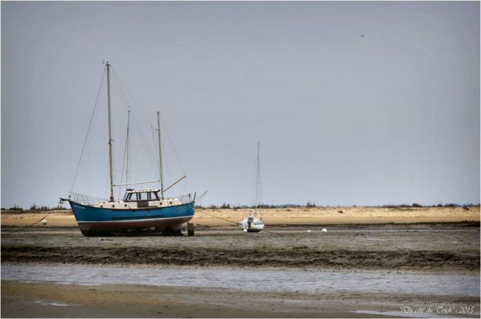 BLOG-DSC_33542-Windekind conche du Mimbeau Cap-Ferret