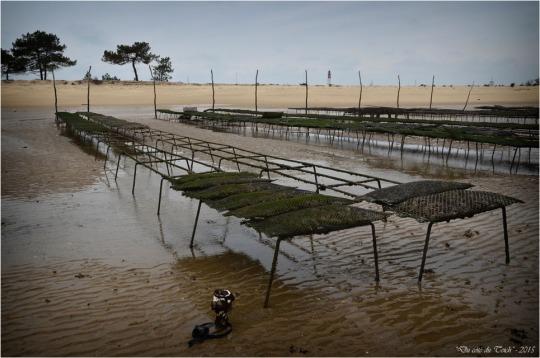 BLOG-DSC_33597-parcs à huîtres Cap-Ferret