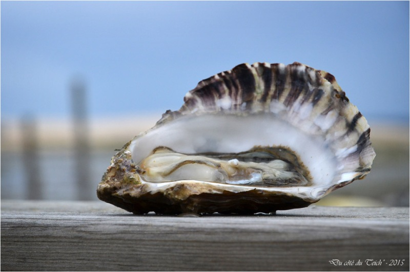 BLOG-DSC_34698-huître et dune