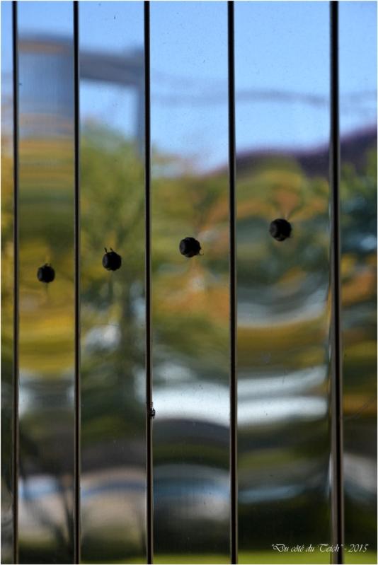 BLOG-DSC_38226-reflet pont Aquitaine