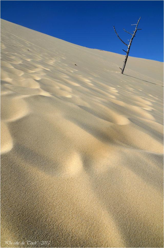 BLOG-DSC_38537-pin enseveli dune Pilat