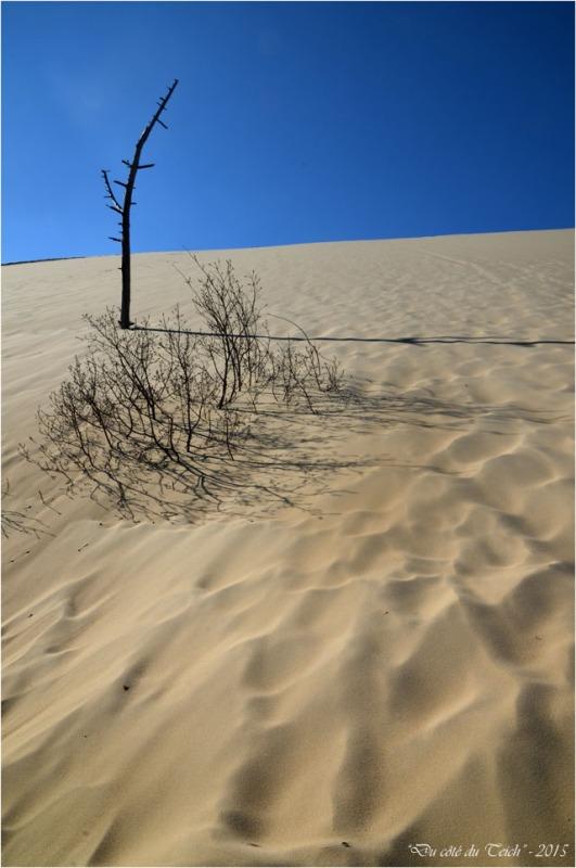 BLOG-DSC_38545-arbres ensevelis dune Pilat