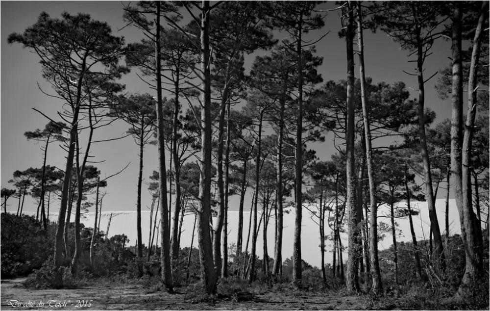BLOG-DSC_38523-forêt et dune Pilat N&B