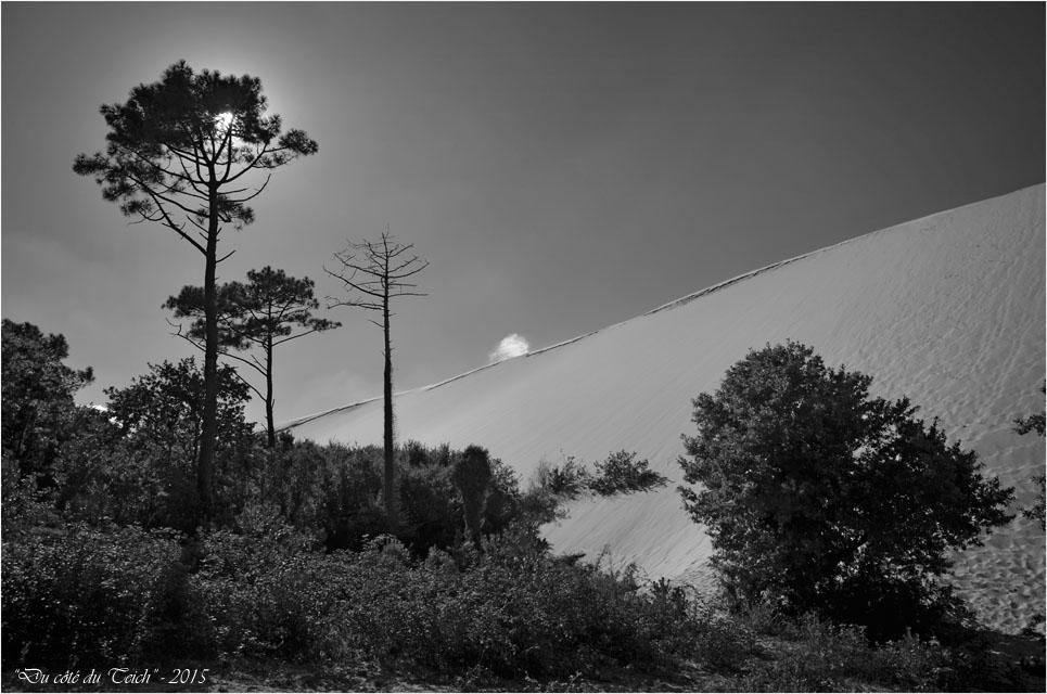 BLOG-DSC_38526-forêt et dune Pilat N&B