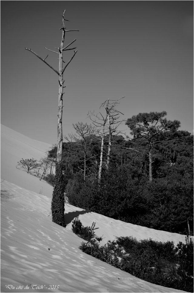 BLOG-DSC_38534-forêt dune Pilat N&B