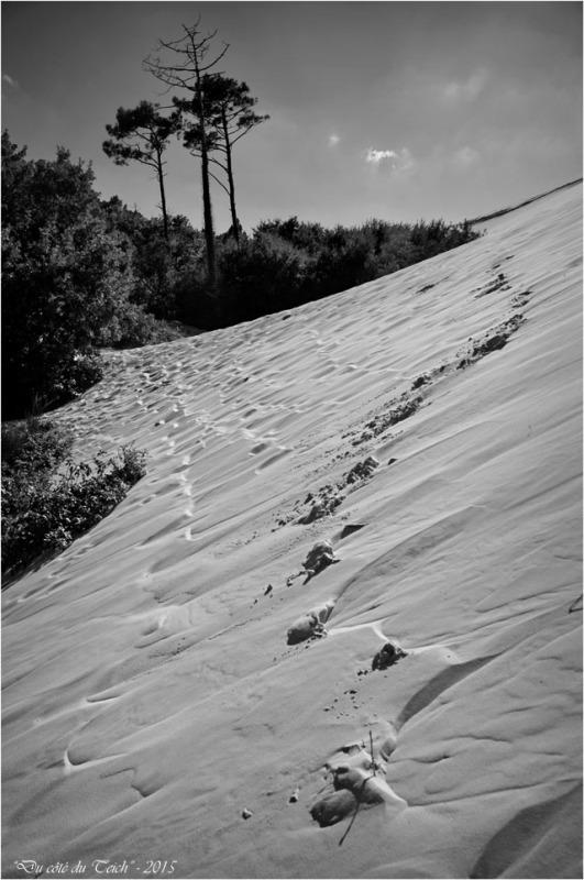BLOG-DSC_38541-forêt et dune Pilat N&B