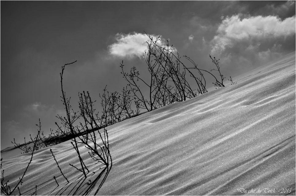 BLOG-DSC_38569-arbres ensevelis et nuages dune Pilat N&B