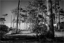 BLOG-DSC_38595-forêt et dune Pilat N&B
