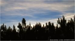 blog-pa302099-grues-cendrées-le-teich-30-oct-2015.jpg