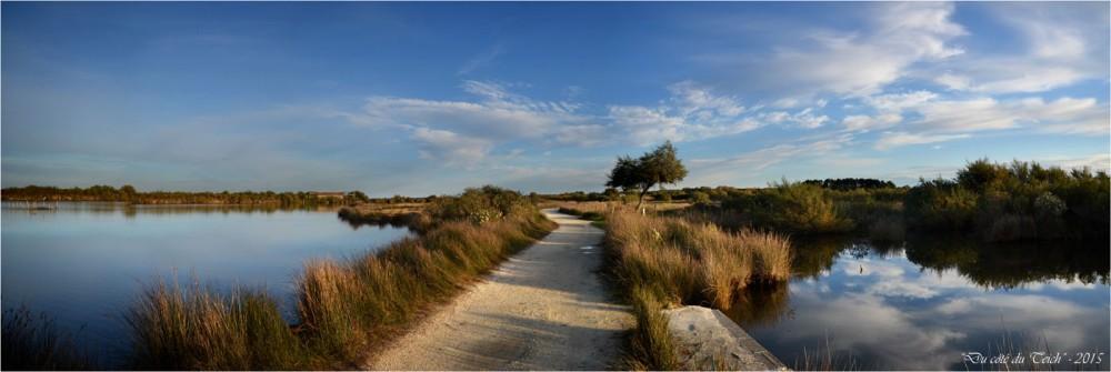 BLOG-DSC_39042-46-2-réserve ornithologique le Teich automne