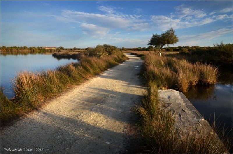 BLOG-DSC_39048-réserve ornithologique le Teich automne