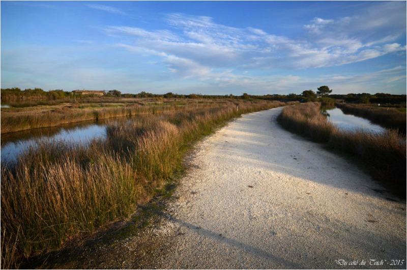 BLOG-DSC_39064-réserve ornithologique le Teich automne