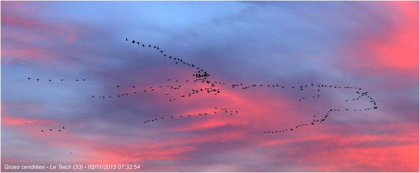 blog-pb022142-vol-grues-cendrc3a9es-le-teich-2-nov-2015.jpg