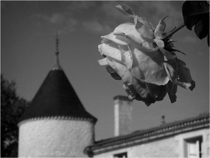 blog-pb062238-rose-château-bétailhe-artigues-nb.jpg
