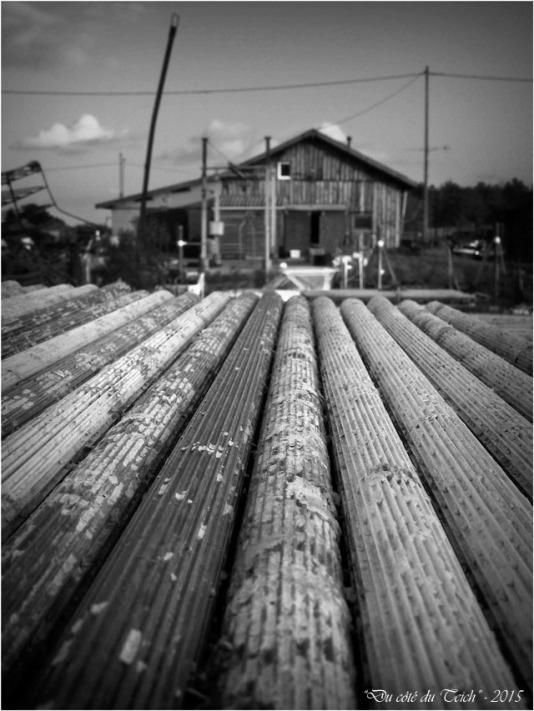 blog-pb282540-tubes-collecteurs-et-cabane-ostreicole-nb.jpg
