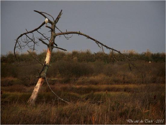 blog-pb282551-aigrette-sur-arbre-mort.jpg