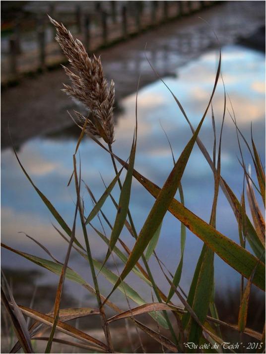 blog-pb282560-roseau-et-reflet-ciel-bassin-affinage.jpg