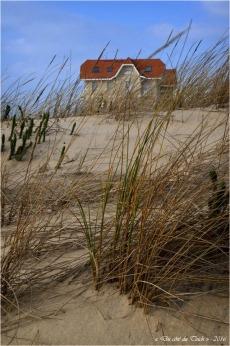 BLOG-DSC_39393-dune oyats et maisons jumelles Biscarrosse