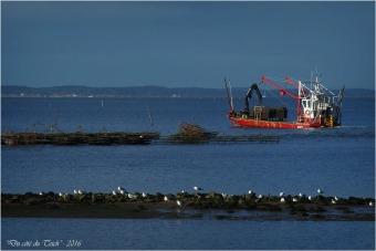 BLOG-P2043727-Flipper port du Rocher