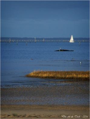 BLOG-P2043757-voilier rivages port du Rocher
