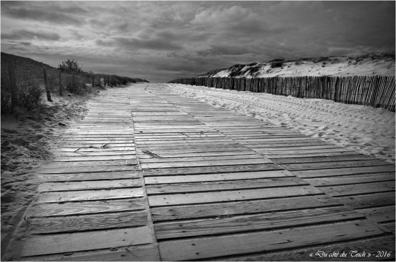 BLOG-DSC_39430-accès plage Cap-Ferret N&B1