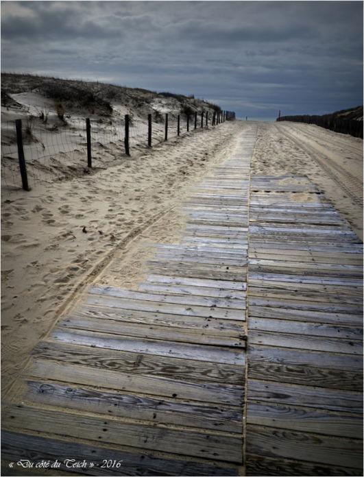 BLOG-DSC_39430-accès plage Cap-Ferret