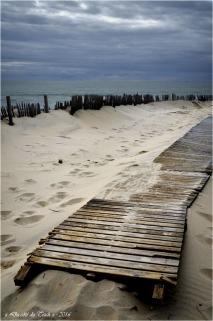 BLOG-DSC_39448-accès plage Cap-Ferret