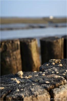 BLOG-DSC_39554-sable épis rivages Cassy 2