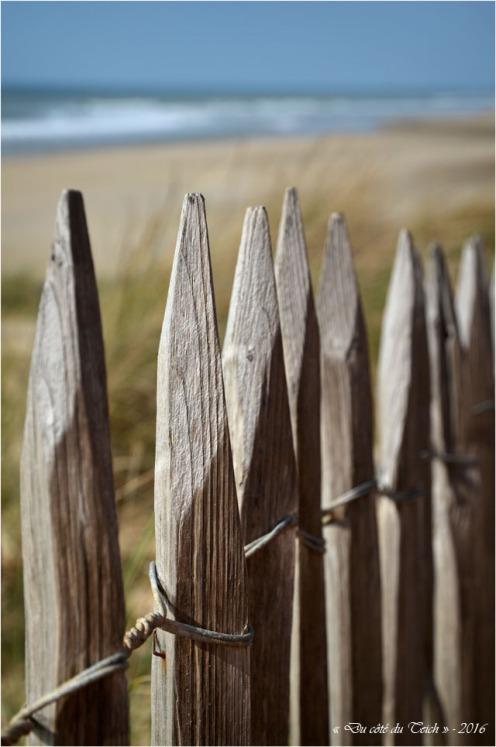 BLOG-DSC_39615-ganivelles plage Lacanau