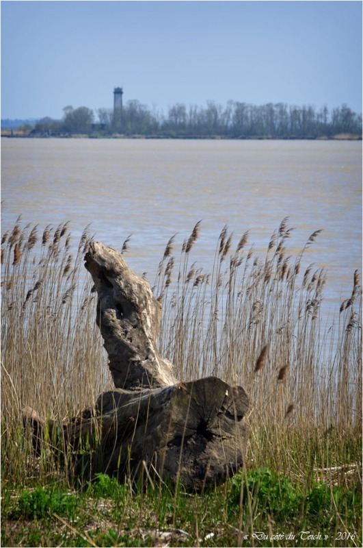 BLOG-DSC_39746-rivages estuaire Gironde et île Patiras