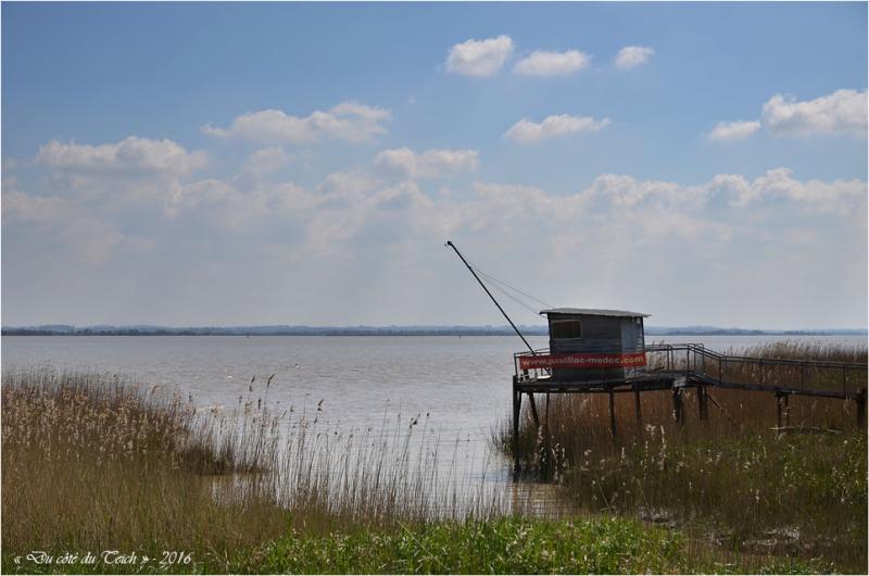 BLOG-DSC_39765-carrelet Pauillac estuaire Gironde