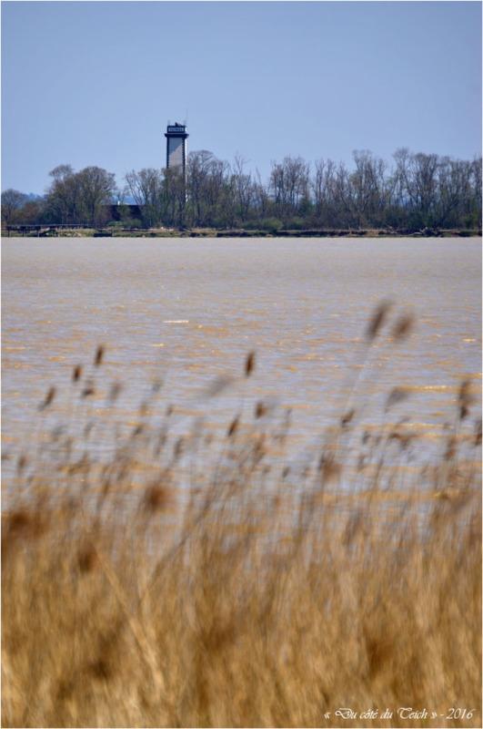 BLOG-DSC_39768-estuaire Gironde et phare Patiras