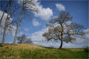BLOG-DSC_39831-arbres Fort-Médoc