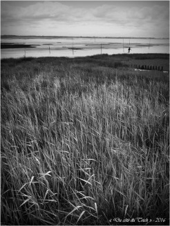 BLOG-P4224395-rivages Audenge N&B2