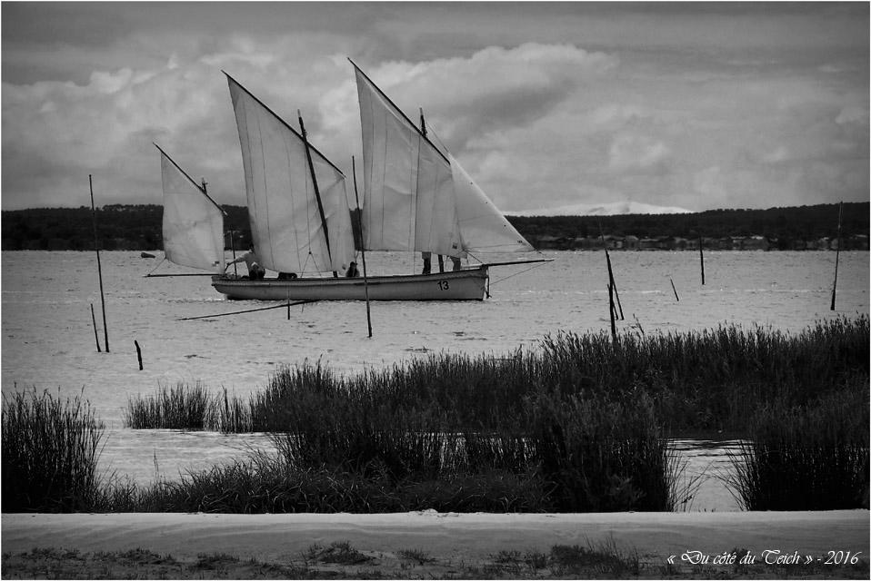 BLOG-P7025002-Canot 13 rivages Audenge et dune du Pilat N&B1
