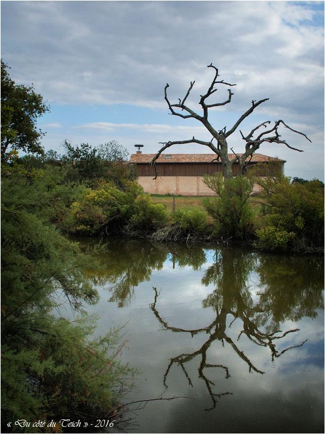 blog-p9086177-arbre-mort-ferme-graveyron