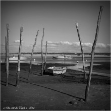 blog-pa186631-conche-mimbeau-cap-ferret-nb