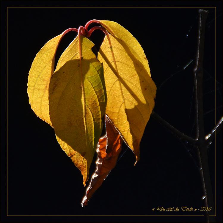 blog-dsc_40648-2-feuilles-fanees-hydrangea