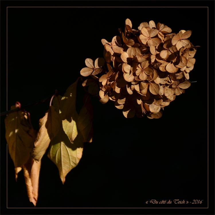 blog-dsc_40672-2-hortensia-fane
