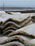blog-p1017572-tuiles-a-chauler-et-rivages-barbotiere-1er-janvier-2017