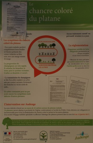 blog-p1037647-chancre-colore-du-platane-audenge-2016