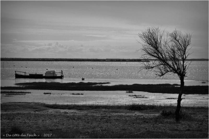 blog-p3268149-rivages-cassy-taussat-nb.jpg
